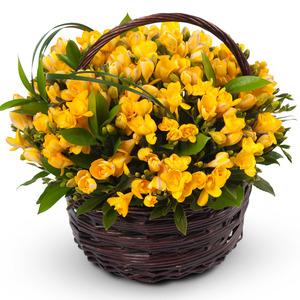 프리지아꽃바구니(봄상품)