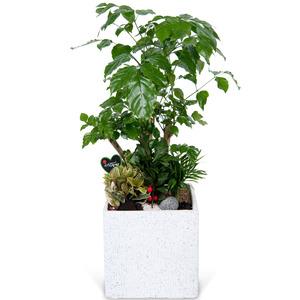 [인기상품]녹보수 테이블(약40cm)